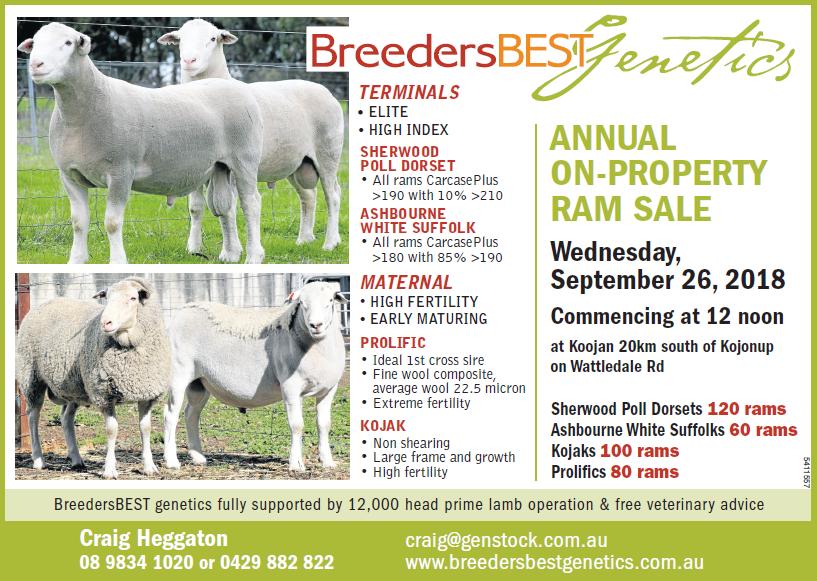 BreedersBEST ram sale 2018